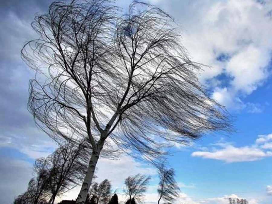 В Тамбовской области ожидаются грозы и усиление ветра
