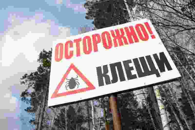 В Тамбовской области появились первые жертвы клещей
