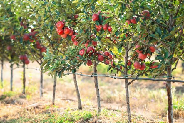 В Тамбовской области появится более 200 гектаров молодых садов