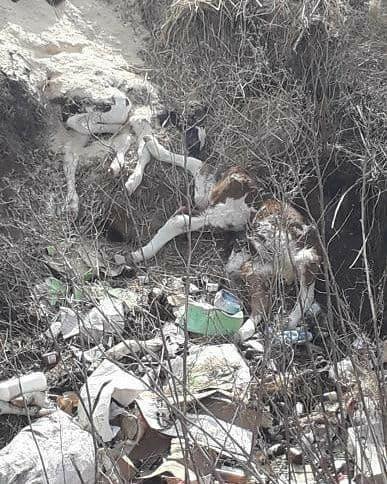 В Татаново рядом с жилыми домами устроили скотомогильник