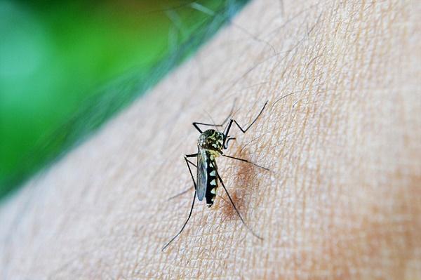 Эксперт рассказал об опасности средств против комаров для человека