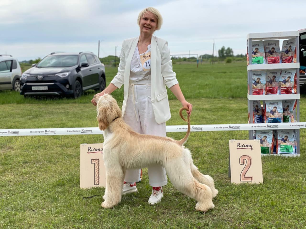 Под Мичуринском прошла ежегодная выставка всех пород собак