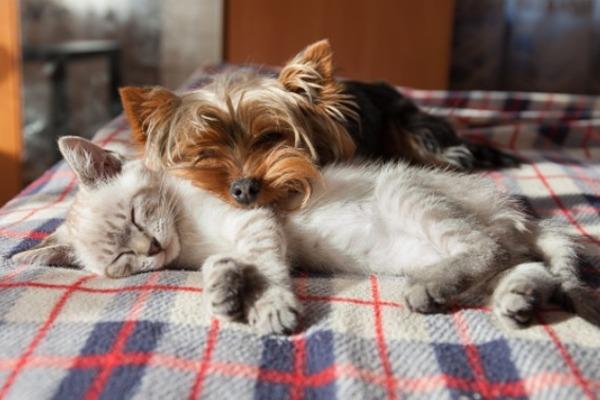 Президент поручил подготовить законопроект о ведении учёта домашних животных
