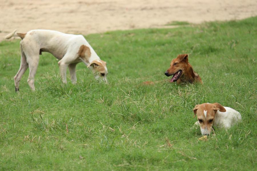 Содержание бродячей собаки в приюте оценили в 243 рубля, усыпление – в 125 рублей