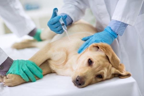 В России началась вакцинация домашних животных от коронавируса