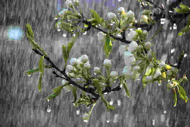В Тамбове рабочая неделя начнётся с дождей