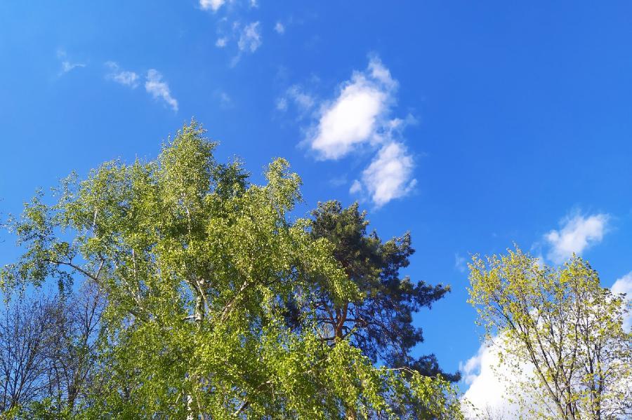 В Тамбовской области ожидается аномально жаркая погода