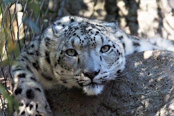 В Тамбовской области прокуратура требует запретить информацию о продаже котят леопарда
