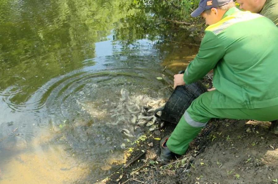 В Тамбовской области в реку выпустили более тонны мальков карпа и толстолобика