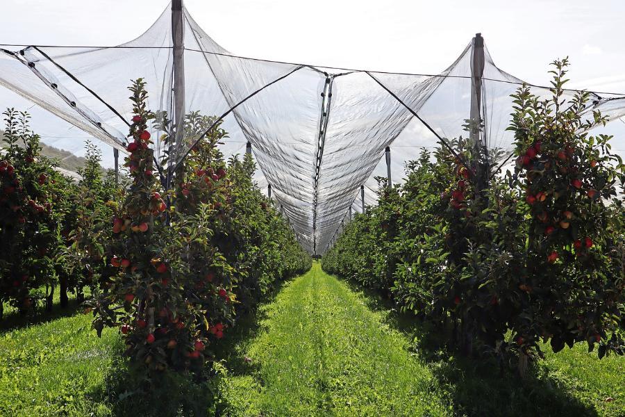 В Тамбовской области заложат фруктовый сад в память о Зое Космодемьянской
