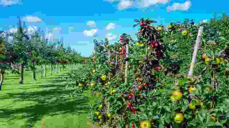В Тамбовской области заложат «Сад памяти» имени Зои Космодемьянской