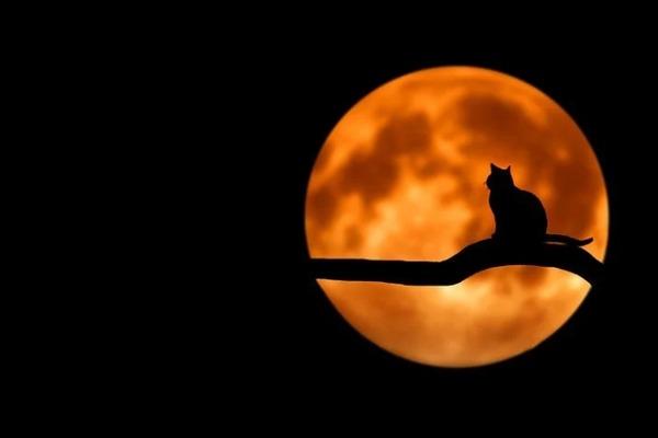 """Во время затмения на Луне может появиться голубая """"корона"""""""