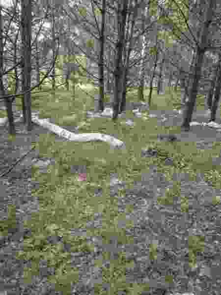 Администрация Рассказовского района проведёт выездную проверку по жалобам местных жителей на мусорный полигон