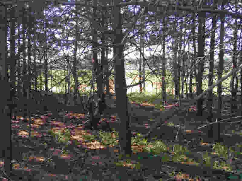 Генеральная уборка: кто-то зачистил лес от мусора перед выездной проверкой администрации Рассказовского района