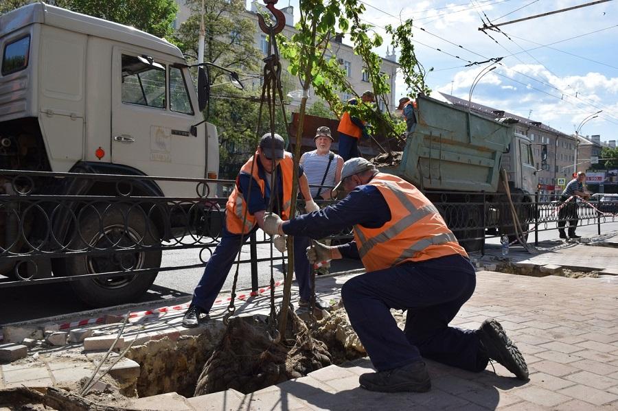 На 385 лип к юбилею Тамбова из бюджета потратят более 2 миллионов рублей
