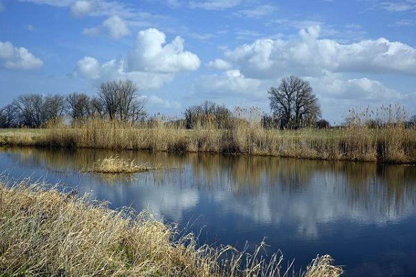 Прокуратура Моршанска провела обследование прибрежной защитной полосы водоемов