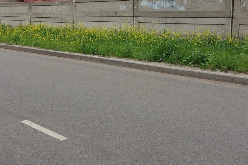 В Тамбове после гневных постов в соцсетях убрали мусор с двух улиц