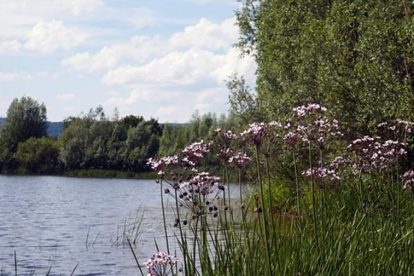 В Тамбовской области незаконно продали участок земли рядом с прудом