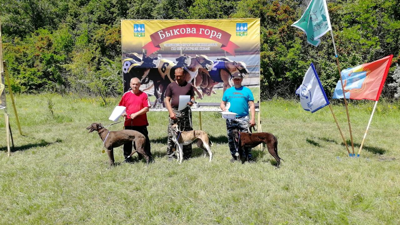 В Тамбовской области состоялись бега борзых собак