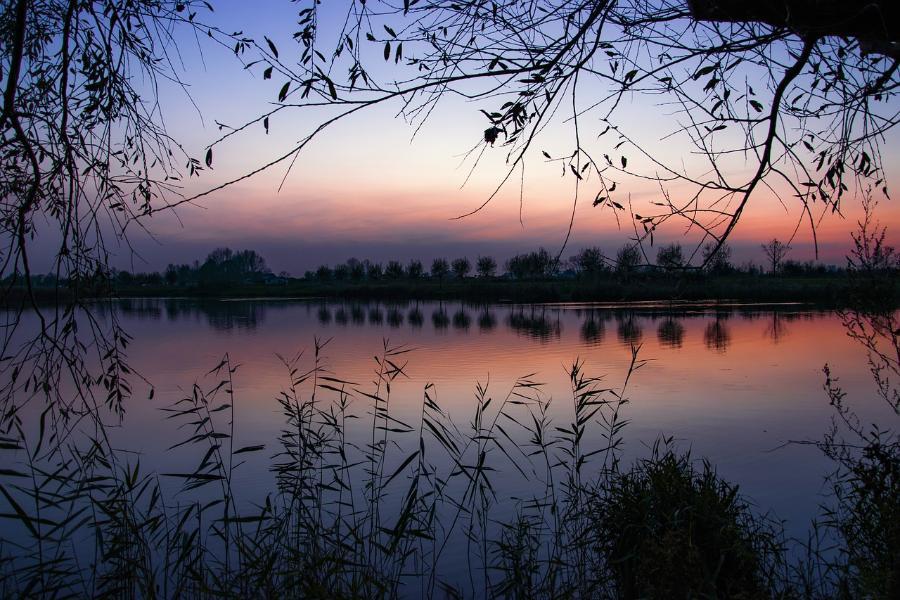 В Тамбовской области в пруду найден труп мужчины