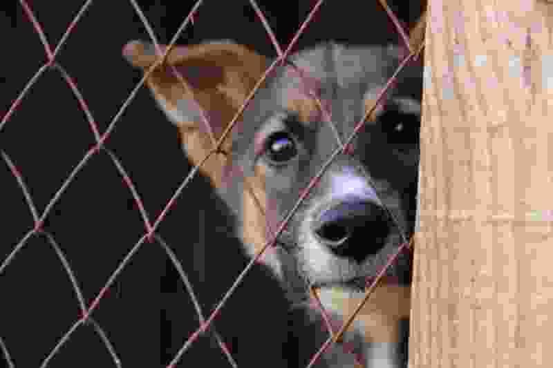 В Тамбовском районе собираются отлавливать бродячих собак