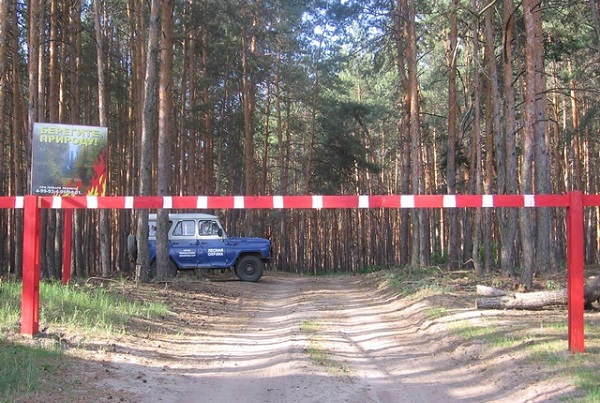 Жителей и гостей области просят соблюдать правила пожарной безопасности в лесу