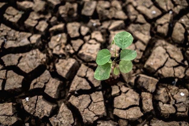 Гидрометцентр раскритиковал прогнозы о засухе в июле