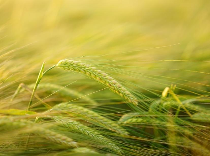 На заводе Тамбовской области нарушили регламент о безопасности зерна