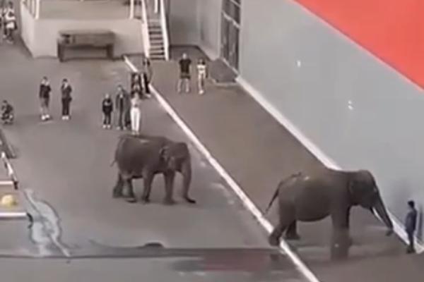 После прогулки слонов по парковке Россельхознадзор проверил цирк в Тамбове