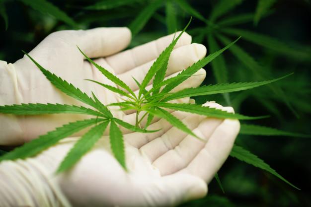 Тамбовчанина задержали за сбыт наркотиков в разных районах области