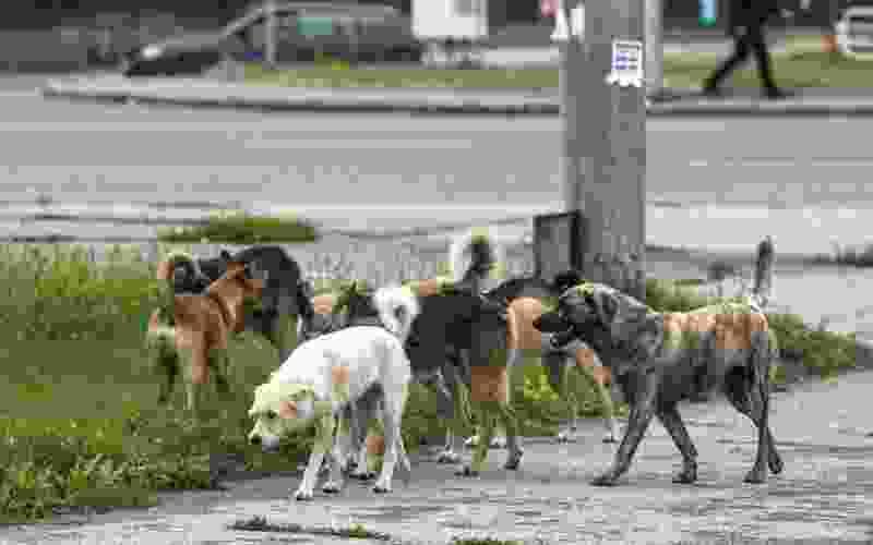 В Тамбове на Набережной рёбенок едва не пострадал от бродячих собак