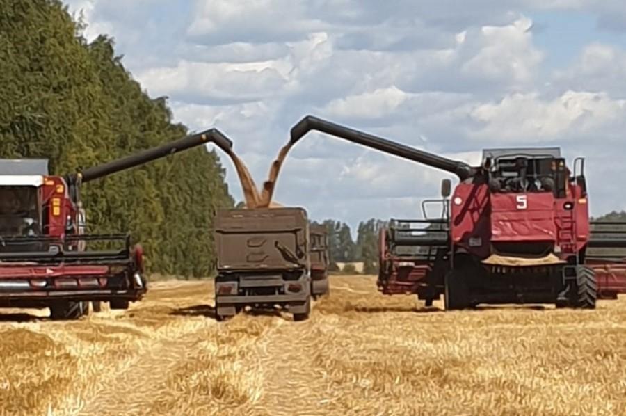 В Тамбовской области начали уборку зерна