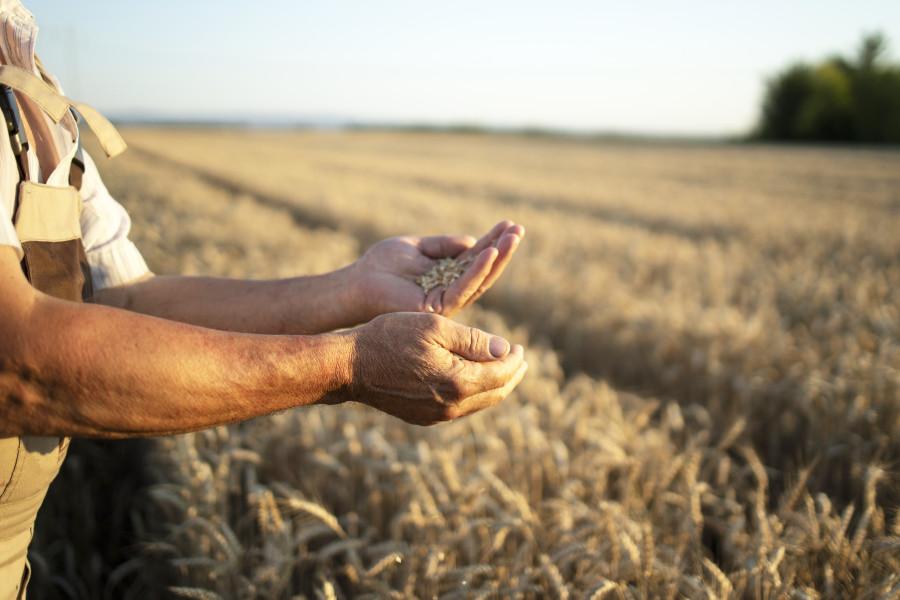 В Тамбовской области определились претенденты на получение грантов семейным фермам