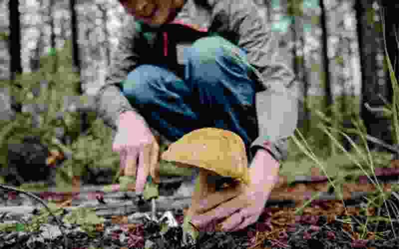 В Тамбовской области отравились двое грибников