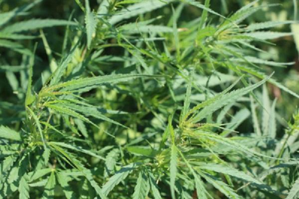 За сутки в Тамбовской области выявлено шесть фактов с наркотиками