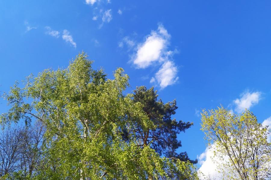 Завтра в Тамбовской области ожидается сильная жара