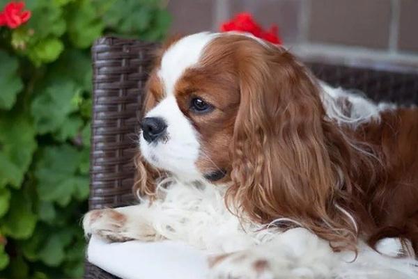 На тамбовском ипподроме 4 сентября пройдёт Всероссийская выставка собак