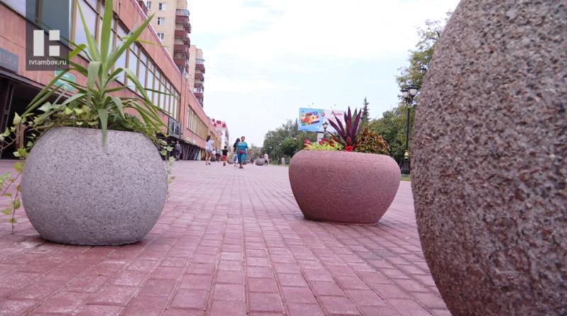 На улицах Тамбова появятся кашпо с экзотическими растениями