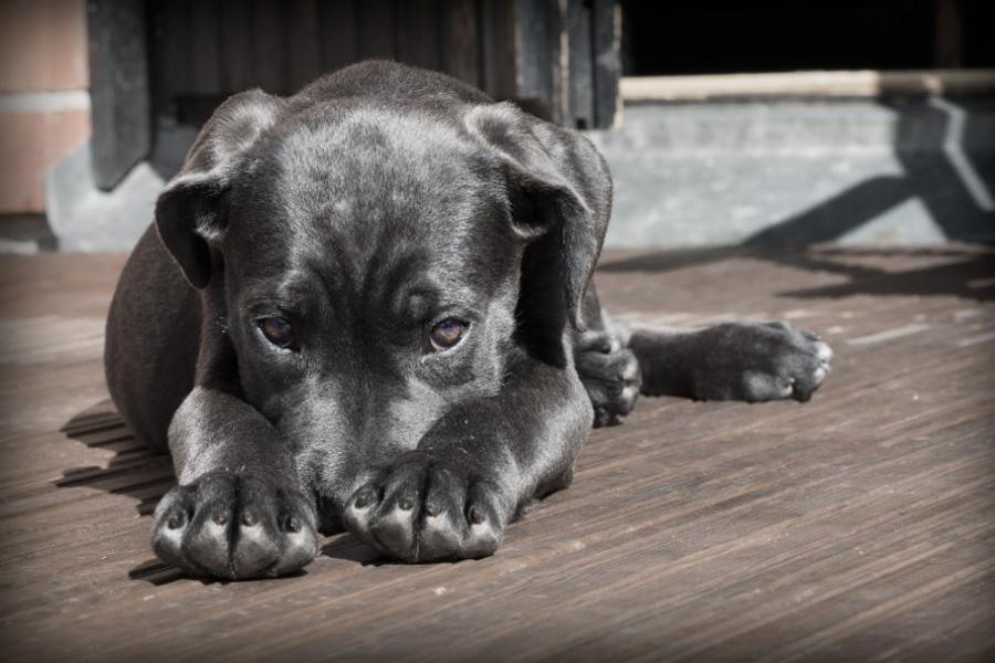 Названы запрещённые действия при виде бродячей собаки