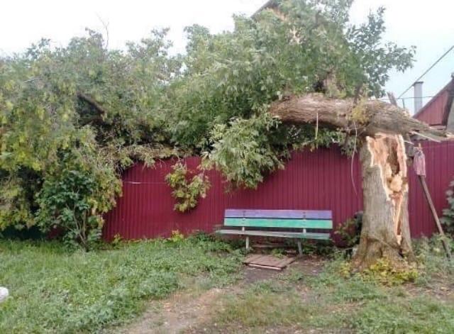 После непогоды в Тамбове обвалило деревья: репортаж из соцсетей