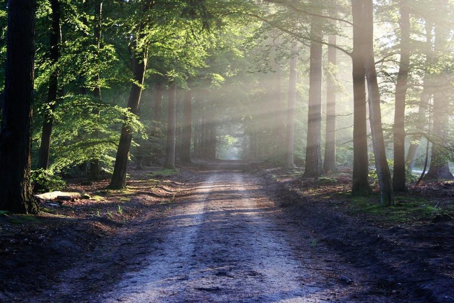 Тамбовчанам не рекомендуется до 13 сентября посещать леса