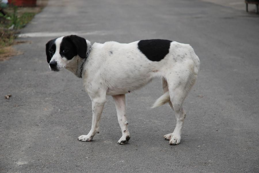 Тамбовчанка пожаловалась на отлов бродячих собак удавками