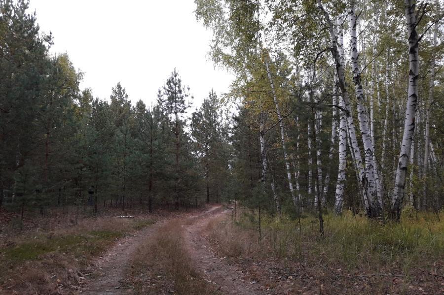 Тамбовские лесоводы подготавливают участки для лесовосстановления