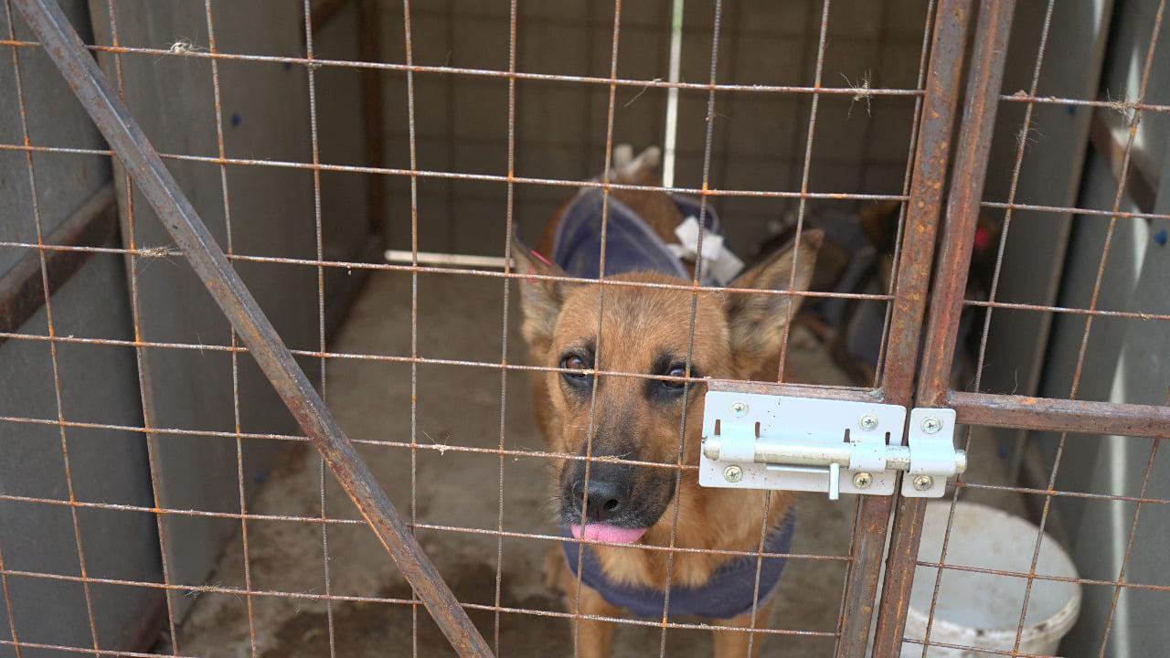 В Бондарском районе проверили условия содержания бездомных животных