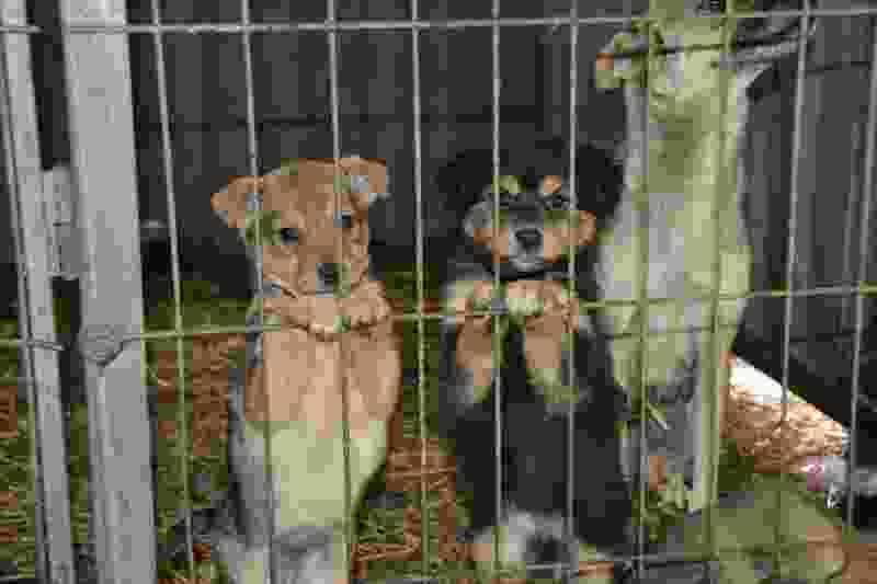 В Мичуринске начинают отлов безнадзорных собак