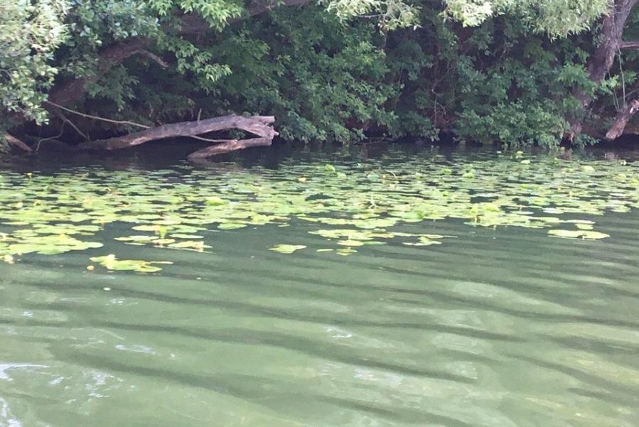 В Рассказовском районе из пруда достали тело 55-летнего мужчины
