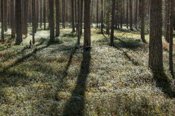 В России меняется климат