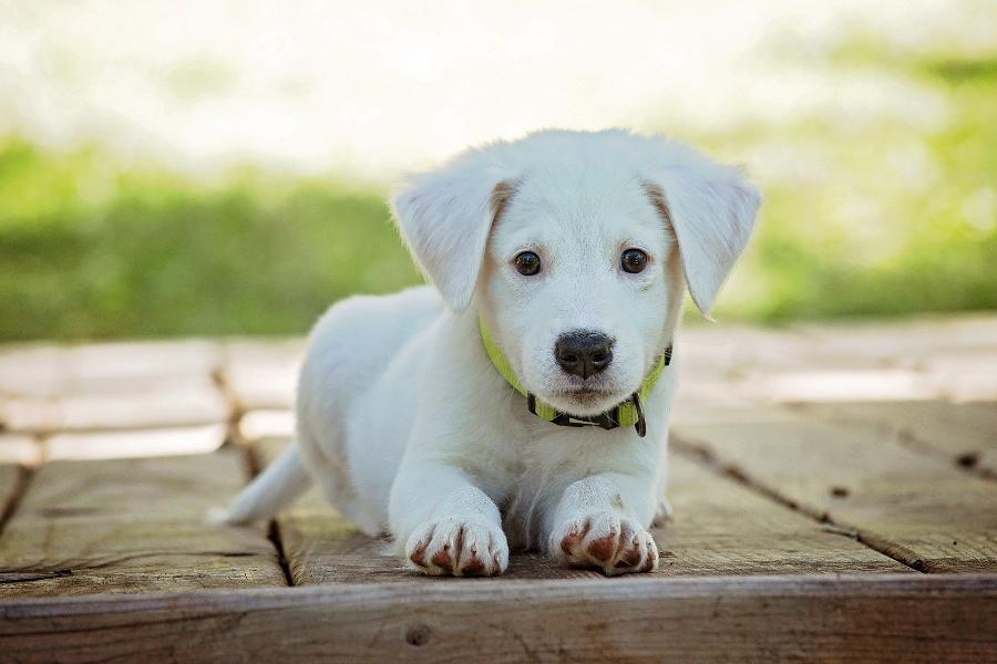 В России отмечают День благодарности собаке