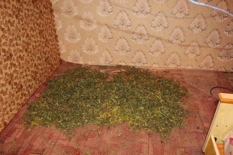 В Тамбове двое ранее судимых мужчин выращивали и продавали наркотики