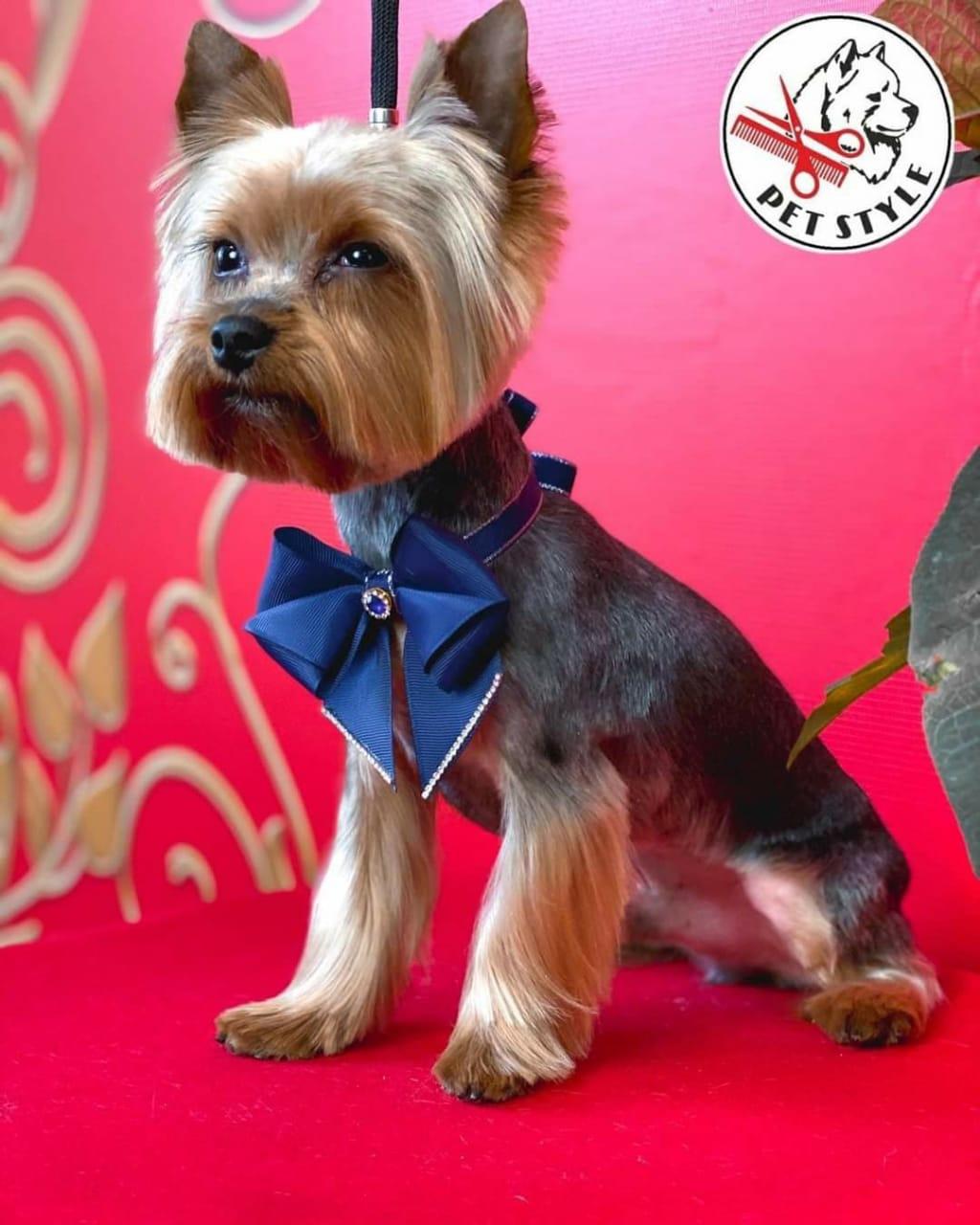 В Тамбове откроется Академия груминга по стрижке собак и кошек